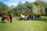 Hobuste näitus. Foto: A.Pärisoo