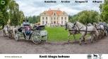 Amadeus (s. 2005) ja Allegro (s. 2005) on sündinud Saaremaal Tika talus ning Aragon (s. 2011) ja Avatar (s. 2010) on sündinud Muhus Tihuse Hobuturismi talus. Kõigi nelja hobuse isa on täkk Anakee, omanik Voore Tallid.  Need neli eesti hobust on ühe väga ammuse unistuse täitumine. Amadeus ja Allegro saabusid meile 2009. aastal, noorte ja kogenematutena. Algasid treeningud. Aastate jooksul sai sõidetud ja võisteldud nii ratsa kui rakendis, osutatud kalessisõiduteenust nii linnas kui maal, ühesõnaga olid usaldusväärsed hobused igal alal. Seejärel 2014. aastal astus meie hoovil treilerist maha järgmine paar eesti hobuseid - Avatar ja Aragon. Algas taas usin töö tegemine, sest soov oli kalessi ette rakendada neli eesti tõugu hobust. Töö nende neljaga on olnud põnev ja täis väljakutseid, iga üks neist on isiksus oma iseloomu ja tujudega. Töös on nad on lõbusad, sitked ja väsimatud, puudutades igaühe hinge kellega kohtume.  Foto autor: Karl-Kristjan Nigesen