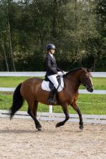Eesti hobuste MV 2021. Hobune Viisa