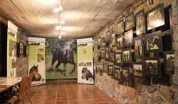 Väljapanek eesti hobusest