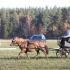 Metilin Meier ja Rosmarii Tisler, hobune Rangi.