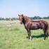 Rodeo (i Roman, e. Roosi)