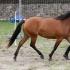 2a mära Rety; kasv ja om Sonja-Hilli Torn