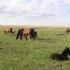 Eesti hobune ja pärandkooslused