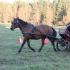 Lukrezia Kajak ja Kirke Nuust, hobune Ehe.