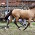 2a mära Ranne; kasv ja om Pihtla HK