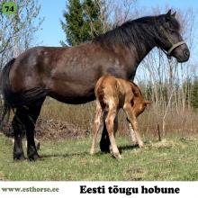 Aida on sündinud 2006. aastal Saaremaal, i. Aku, e. Terri, kasvataja Aarne Lember, omanik Kristi Raudsepp.  Aida on ahkmust arhailist tüüpi, mitte eriti kõrge mära. Ta on tahtekindla iseloomuga, kuid samas võib teda usaldada, ratsutamisel ta ei trikita, liikumised on head ning võhmagi jagub. Aida on oma elu jooksul katsetanud saanihobuse ja ratsahobuse tööd, kuid põhiliselt olnud väikeses talus laste lemmik ning tubli ja hoolitsev ema oma järglastele. Laste meelest on temaga lahe kodukoplis ratsutada ja tema varsad on toredad ja naljakad. Järglased on tal mitmekülgsed, näiteks Vermut II on innukas hüppehobune, märajärglased aga tublid ratsud, kelle intelligentsus võimaldab neile trikke õpetada ja ilma valjasteta sõita.  Foto autor: Kristi Raudsepp