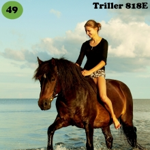 Triller on sündinud 2001. aastal Saaremaal, i. Tukker, e. Elfa, kasvataja Jaan-Aleksander Rooda, omanik Meeri Lonn.   Triller on väikese tüdruku unistus ja suure tüdruku reaalsus. Vahest usaldusväärsem kui inimene ise, kõik ideed on temaga koos ellu viidud. Praegu on Trilleri tähtsamateks ülesanneteks jäänud tiinele märale seltsi ja kaitse pakkumine või noortele täkkudele pealikuks olemine. Alaline valmisolek on maastikul ratsutamiseks, laste talutamiseks, ree- või vankrisõitudeks ja uuteks väljakutseteks. Triller on tubli ja universaalne tõu esindaja, kes tuleb kõigega toime.  Foto autor: Greete Mänd