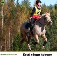 """Ruudik on sündinud 2005. aastal Järvamaal, i. Ruttar, e. Africana, kasvataja Joel Jürisson, omanik Marian Koplimäe.   Ruudik, omadele Räim, on ostetud 3-aastasena ja erilist sportlikku ambitsiooni omanikul temaga esialgu ei olnud. Loodus pole õnnistanud Räime just üleliia heade käikudega või suurepärase hüppetehnikaga. Oma kehaehituselt oleks ta vast rakendisporti kõige paremini sobinud, kuid kahjuks on see siiani ainus spordiala, millega Räim üldse nõus ei olnud. Oma emalt on isand Räim pärinud suurepärase töötahte ja """"pommikindluse"""" ning peale edukaid esinemisi kestvusratsutamises, takistus- ja koolisõidus on isand Räim liikunud edasi schoolmasteri seisusesse ja õpetab lapsi Piira tallis.  Foto autor: Külli Tedre-Gavrilov"""