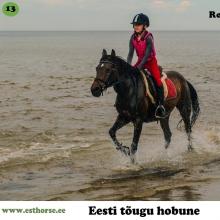 Rooma on sündinud 1994. aastal Saaremaal, i. Remmik, e. Ekstra, kasvataja Aili Kirst, omanik Anne Udeküll.   Rooma on kergelt tulise iseloomuga eesti tõugu mära, kes takistusi nähes alati võidule mõtleb. Reinu Ratsatalus on Rooma alati laste lemmik. Nooremana on Rooma võistelnud takistussõidus kuni 110cm parkuure. Viimased 10 aastat on ta õpetanud väikseid alustavaid ratsutajaid ja olnud esimeseks võistlushobuseks kümnetele ratsutajatele. Rooma on toonud ka mitmeid järglasi, kes on sama tulihingelised takistussõiduponid nagu nende ema.  Foto autor: Mari-Ann Udeküll