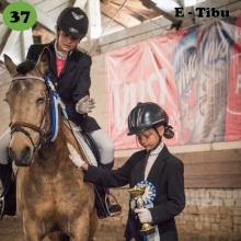 E-Tibu on sündinud 2006. aastal Harjumaal, i. Elkar, e. Anka, kasvataja Heiki Orusalu, omanik Helen Paas.   E-Tibu on üks eesti hobuse mitmekülgsuse ja südikuse eeskuju. Oma eriskummalise nime sai ta peale seda, kui ta kahenädalasena oma ema kaotas ning kahejalgsed asendusemad teda hellitavalt Tibuks hakkasid kutsuma. Kuna nimi pidi algama isa järgi E-ga, siis see sinna ette ka sai. Kui ta veel õite pisike oli, ennustati talle lühikest ning üsna tumedat tulevikku. Aga vastupidiselt kõigi teadjamate ennustustele on inimene Tibu jaoks alati jäänud austusväärseks partneriks ja suureks sõbraks. Eriti suure hoolega hoolitseb ta kõige pisemate ja nõrgemate eest, justkui mäletades oma keerulist lapsepõlve.   Tibul on oma vanuse kohta olnud päris mitu ametit. Leiba on ta teeninud tubli ratsutamisteraapia hobusena, Jõuluvana saanihobusena ja harrastaja võistlusratsuna. Hetkel on tal käsil elu kõige tähtsam amet – ta on roheliste ja pisikeste ratsanike esimene võistlushobune. Seda rolli võtab ta nii suure tõsidusega, et nii mõnelgi on tekkinud kahtlus, et koolisõiduvõistlustel teab Tibu kõiki skeeme peast. Tulemusi on tal ette näidata ka takistussõidus, kolmevõistluses ja derbyl. Nimelt naudib ta hüppamist nii üksi kui ratsanikuga ja kuna ta suurt midagi ei pelga, saab tema peale alati kindel olla.  Foto autor: Andri Allas