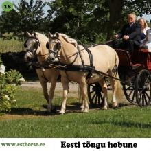 Eetika (vasakul) on sündinud 1999. aastal Muhumaal, i. Ettur, e. Teka. Rosetta (paremal) on sündinud 2006. aastal Muhumaal, i. Rikoshet, e. Eetika. Mõlema hobuse kasvataja ja omanik Tihuse talu.   Eetika ja Rosetta on ema ja tütar, kes käivad paarisrakendis. Nad on Tihuse talu raudvara ja peamised pulmarakendi hobused. Mõlemad hobused on kasutuses ka turismis nii rakendi- kui ka ratsahobustena. Tegu on väga usaldusväärsete loomadega, kelle sadulasse võib lubada ka päris ilma kogemusteta ratsaniku. Lisaks pulmadele on osaletud ka filmis
