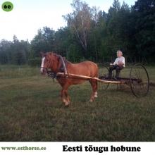 Andi II on sündinud 2006. aastal Läänemaal, i. Andi, e. Ronja, kasvataja ja omanik Aleksei Lotman.   Andi II käib aeg-ajalt sadulas ja aiste vahel, muuhulgas saab temaga kevadeti aiamaa haritud. Põhiosa ajast elab kodulähedases metsas. Täkupoisil on vahelduv iseloom, vahel tore, vahel vähem. Järglasi tal veel pole, kuid sugulasi see-eest hulgim.