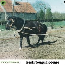 Andra on sündinud 1993. aastal Pärnumaal, i. Aku, e. Tulla, kasvataja Sirje Põldaru, omanik Taimi Usin.  Andra on Aku järglasele omaselt tagasihoidlikuma loomuga hobune. Tema õpetamisel toimis ainult kavalus ja heatahtlikkus. Vägisi midagi peale surudes hakkas mära protestima. Nooruses on Andra olnud väga mitmekülgne hobune. Temaga said tehtud kõikvõimalikud põllu- ja aiatööd ning samaväärselt oli võimalik selle uhke traaviga märaga ka ratsutada. Kui Andra oli 3-aastane, käis ta Soomes sõidu- ja veokatsete sõpruskohtumisel, kus võistles soome hobusega ning edestas teda. Tol korral soovisid soomlased väga Andrat ära osta, kuid omanik ei soovinud oma heast sõbrast loobuda. Tänutäheks on see väärikas mära pannud aluse oma omaniku aretustööle ning jätnud mitmeid väga häid ja olulisi järglasi eesti hobuse tõus. Näiteks litsentseeritud sugutäkk Euro 767E, 2008. aasta parim noormära Viroola 4179E ja väga edukas rakendihobune Veto. Sel aastal tähistab teenekas mära oma veerandsajandat sünnipäeva.  Foto Taimi Usina erakogust.