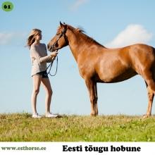 Terja on sündinud 2011. aastal Saaremaal, i. Teik, e. Anja, kasvataja Pihtla hobusekasvandus, omanik A. Metsmaker.  Terja elas esimesed neli eluaastat karjas muretut hobuseelu ning siis sai temast ratsahobune. Iseloomult on Terja tõeline inimese- ja maiusesõber. Ta on alati valmis nuhkima taskutes, et midagi head leida ja kui platsil ratsutades anda talle valida, kuhu seisma jääda, siis liigub ta alati esmajoones mõne inimese juurde.   Tema uudishimu on piiritu ja ta aitab näiteks inimesel boksis uut heinavõrku üles sättida ning platsil rebasekutsikate jälgimine ja nendega mängimine tundub talle iseenesestmõistetav.  Mõned uued asjad panevad teda ka võpatama, aga eks meil kõigil ole oma nõrgad kohad.  Karjas käitub ta ikka nagu tõeline eesti tõugu mära ehk tema on see, kes asjad paika paneb. Oma vanematelt on ta pärinud suurepärase väheste märgistega välimuse ja ilusa liikumise ning hüppe. Sadulas käitub Terja viisakalt ning on igati koostööaldis, aga vahel harva tuleb talle muidugi ka silma väike vallatu säde ja siis on vaja kindlameelset ratsanikku, et isepäisest krutskineiust saaks jälle kõige fantastilisem ratsu.  Foto autor: Anett Jaadla